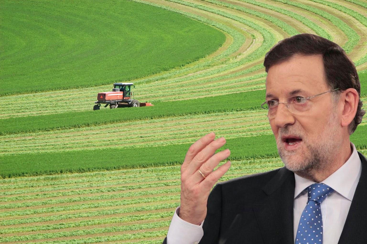 Nuestras exportaciones de alfalfa