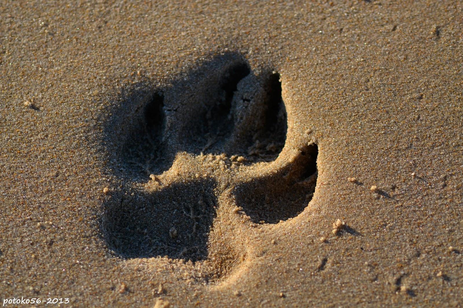 Pisada de perro en la arena de la playa