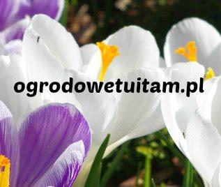 piszę też bloga o zielsku i ogrodach pokazowych