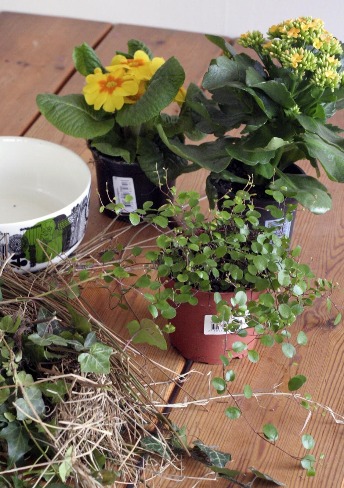 Öarnas trädgårdsplanering: mars 2013