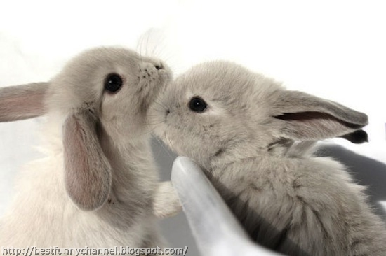 Two kissing rabbits.