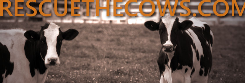 RESCUETHECOWS.COM