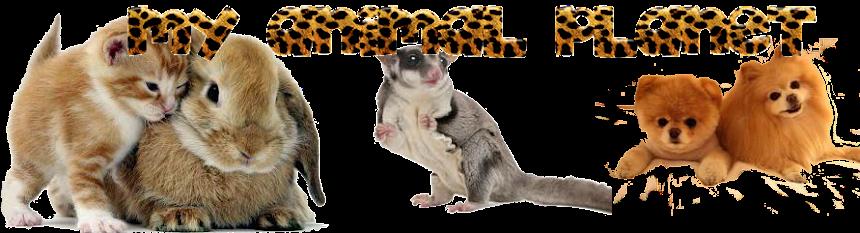 MY ANIMAL PLANET