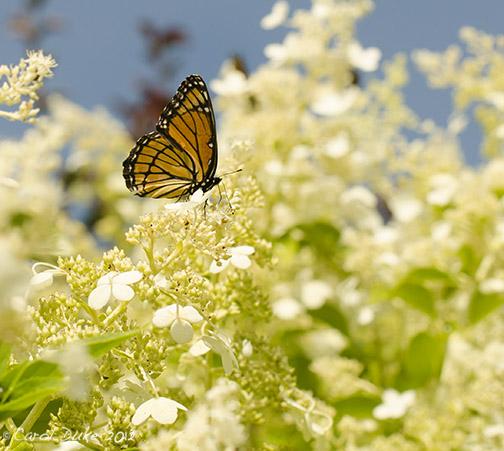 Flower Hill Farm Networkedblogs By Ninua
