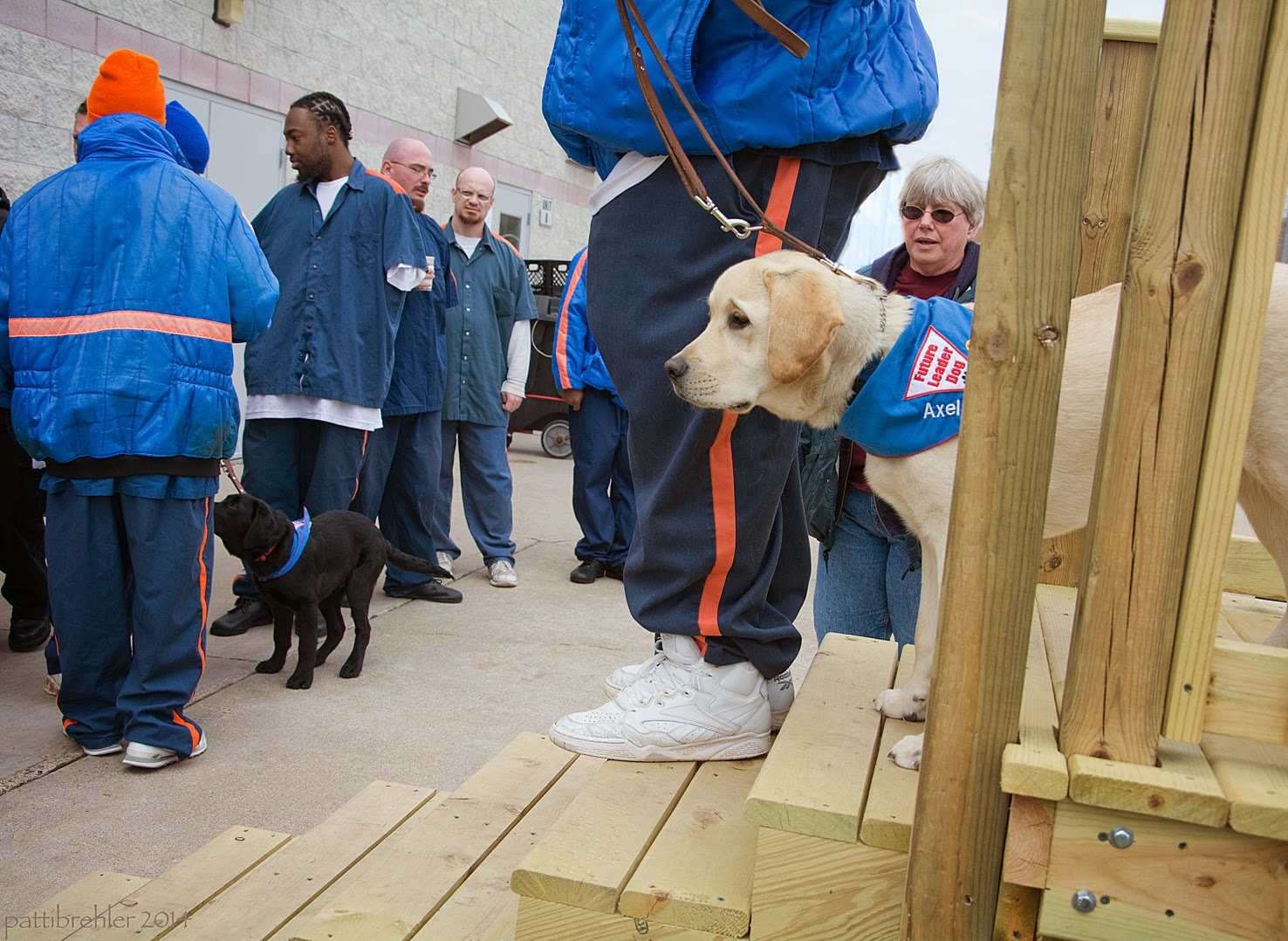 A side shot of a yellow lab puppy and the ligs of a man coming down wooden stairs. The man is wearing prison blue pants, white tennis shoes, and a blue jacket, only visible from the waist down. The man is one step down from the puppy, whose front paws are on the step behind him and his rear paws are on the top landing. The puppy is wearing the blue Future Leader Dog bandana and his leash is loose. A woman's head is visible behing the puppy, she has short white hair and sunglasses. To the left in the background are four or five men dressed in prison blues with a black lab puppy standing by them. The man on the far left is wearing an orange stocking cap.