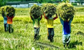 kegiatan ekonomi pertanian