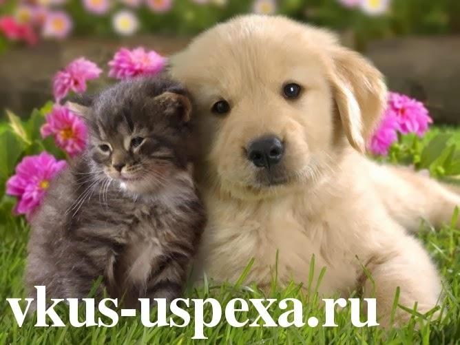 Влияние домашних животных на человека, Тема домашние животные, Домашние животные видео, Влияние кошек на здоровье человека, Влияние собаки на человека