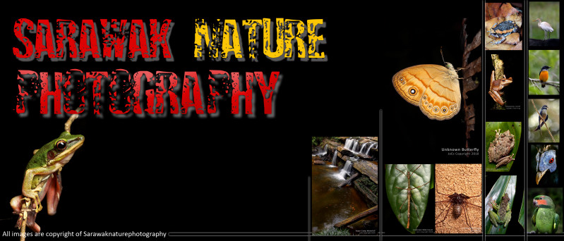 Sarawak Nature Photography