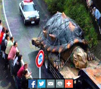 Worlds biggest turtle found