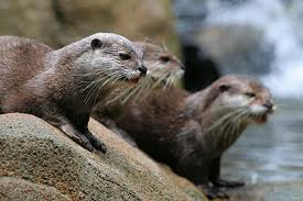 Sea Otters picture