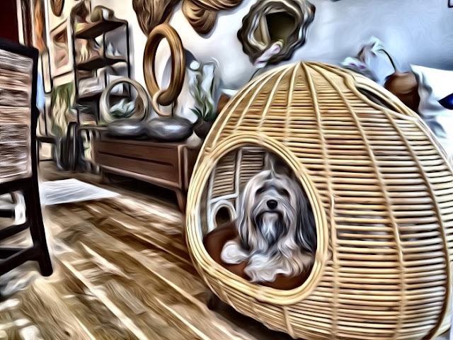 J-Joy & Landi Virginia Highland Thailand store dog bed