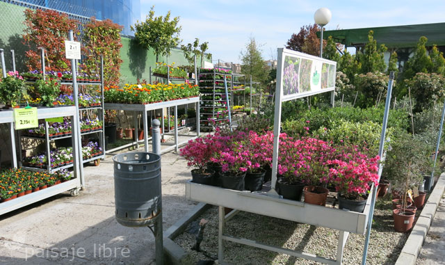 visita al centro de jardiner a pradillo paisaje libre