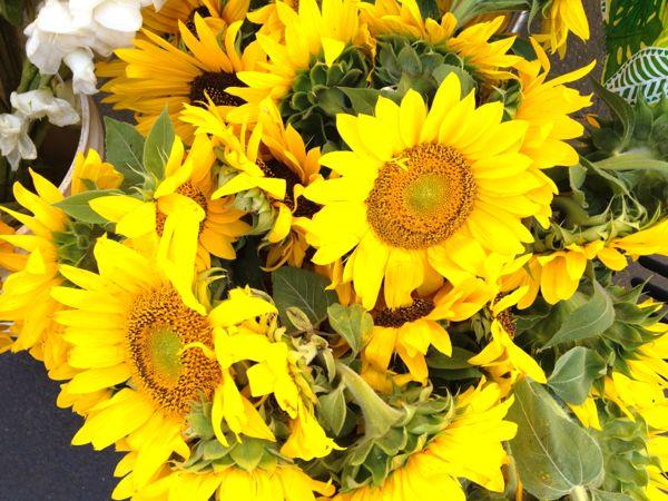 NowThisLife.com - Elk Grove Farmer's Market - sunflowers