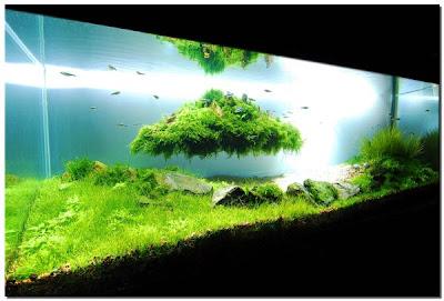 Aquascape 1