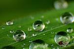 Água (rain drops)