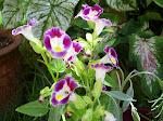 Flores do jardim da minha mãe