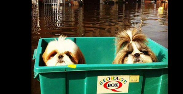 youtube 泰國淹水