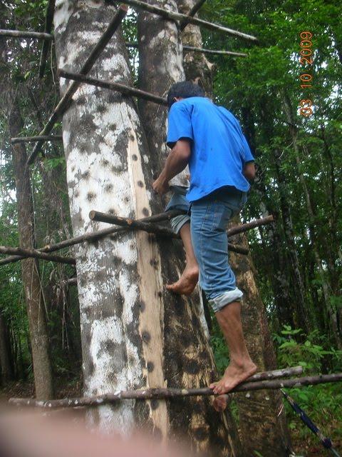Pengertian gaharu----gaharu adalah kayu berwarna kehitaman dan