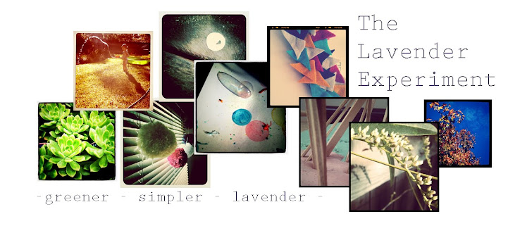 The Lavender Experiment