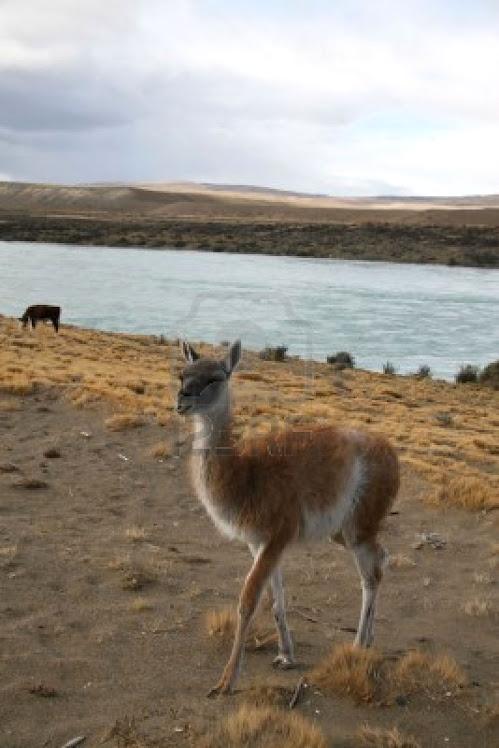 Estudiando nuestra Patagonia