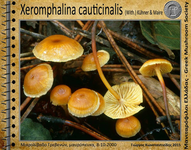 Xeromphalina cauticinalis (With.) Kühner & Maire