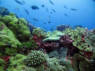 Habitat Laut
