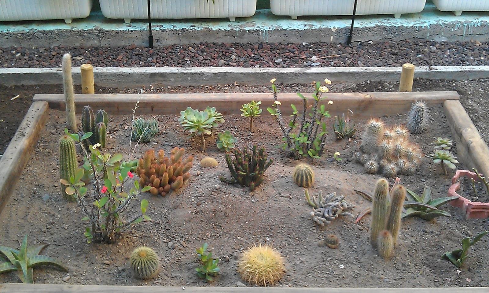 Un jardin el la azotea jardineando por la vida - Troncos para jardin ...