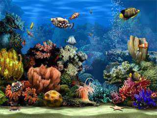 programa descanço de tela com um aquario animado