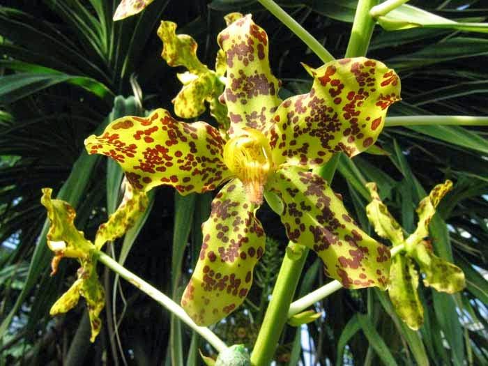 10 tumbuhan langka di indonesia hari hari indah