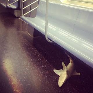 tiburon metro