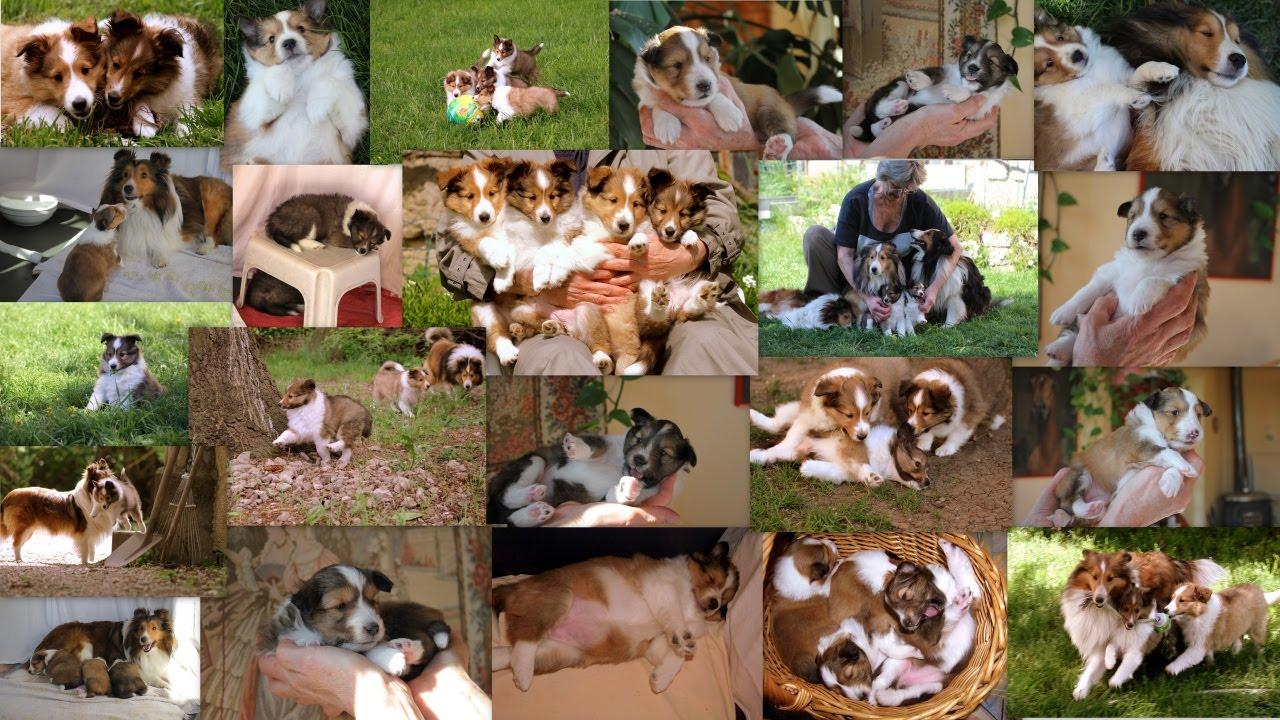MORDILLIO'S ANIMALS
