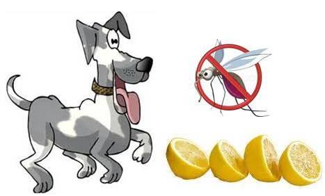 Is Lemon Juice Good For Dogs Skin