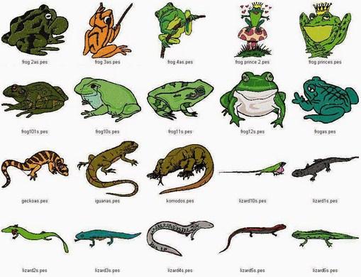 Pengertian, Klasifikasi, Struktur Reptil