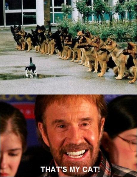 Chuck Norris's Cat!