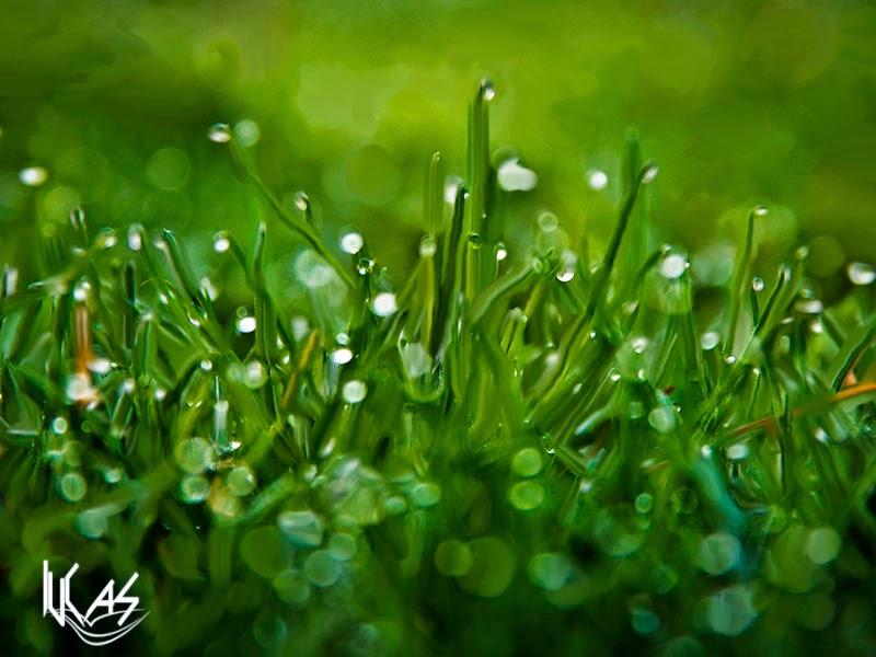 Rocio en la hierba