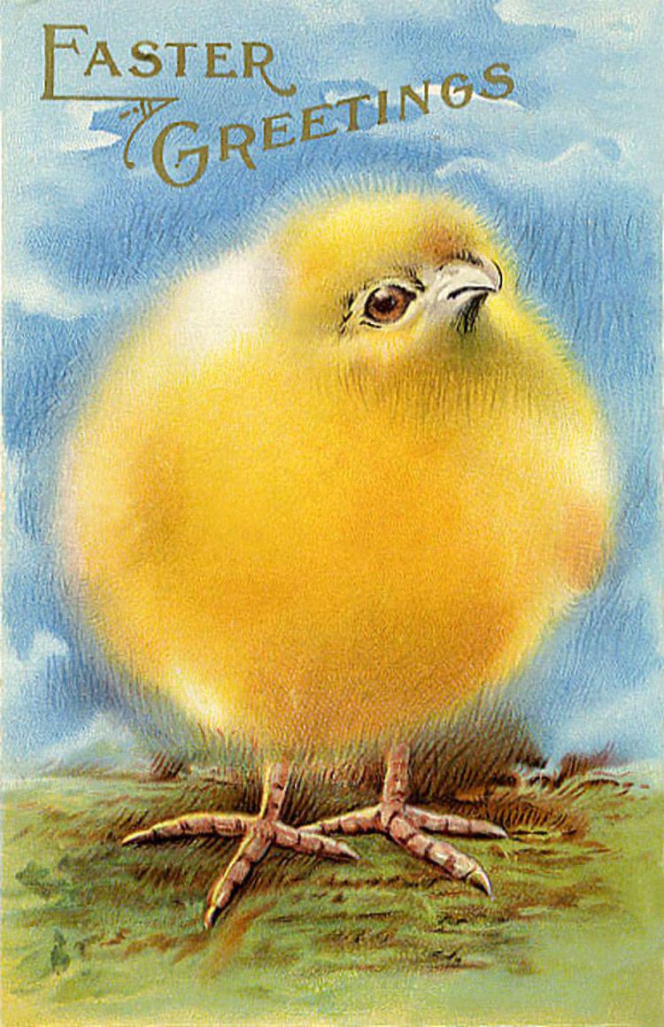 Открытки на пасху с цыплятами