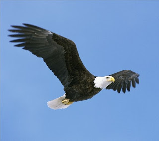 Eagles Pictures