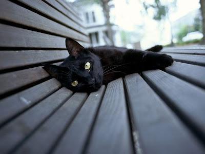 Mitos Dan Fakta Kucing Hitam Di Berbagai Negara - Asnur Blog