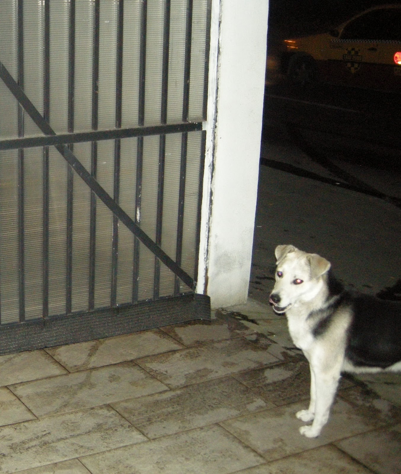 De ce este husky diferit de husky Similitudinea și diferența dintre husky și husky