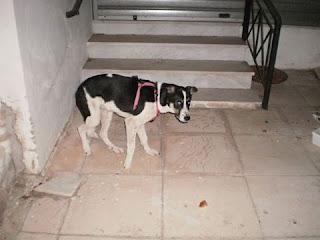 Βρέθηκε στα Άνω Λιόσια σκυλάκι μει κόκκινο σαμαράκι. Το ψάχνει κάποιος?