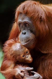 binatang beserta keluarganya