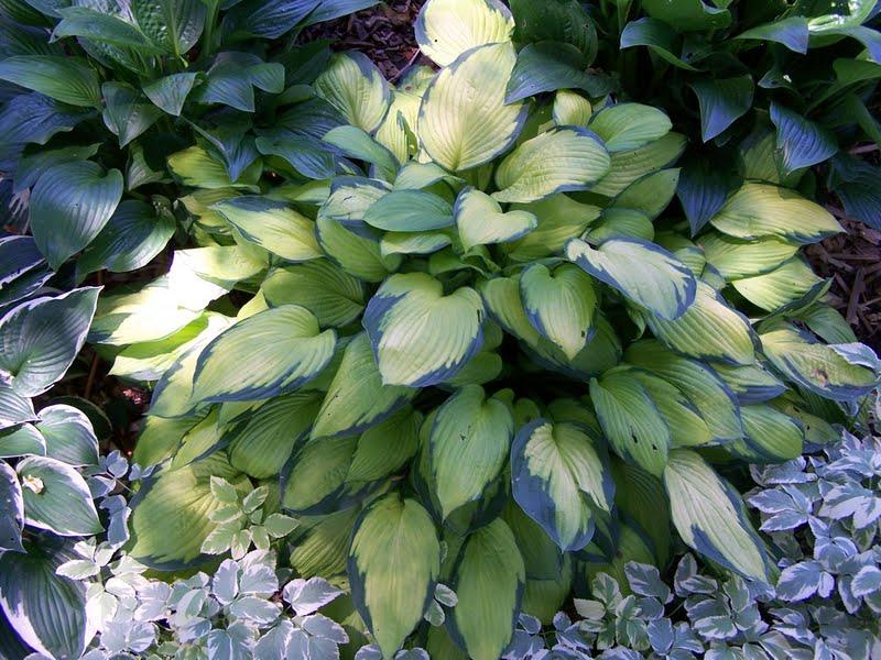 Vegetable Greenhouse Ideas