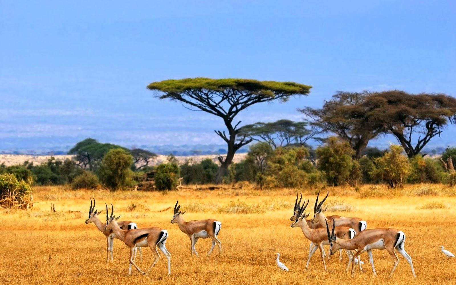 Safaris África Meridional, Los Micato Bespoke Safaris - Micato Safaris