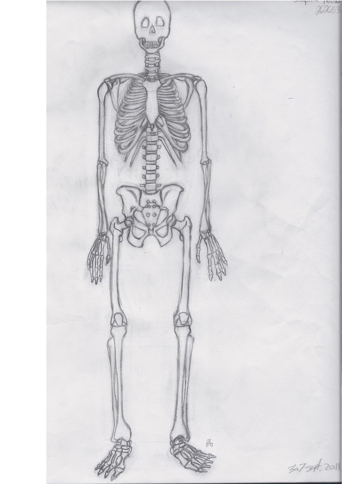 Daphn perron squelette - Dessiner un squelette ...