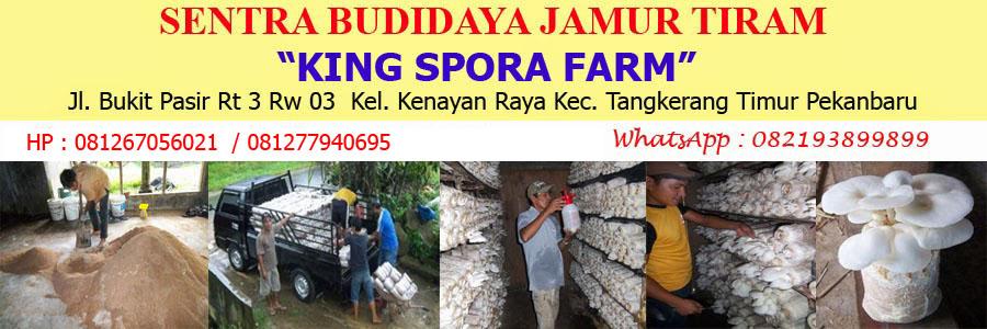 JAMUR TIRAM PEKANBARU | Budidaya jamur tiram di pekanbaru | bibit jamur tiram di pekanbaru