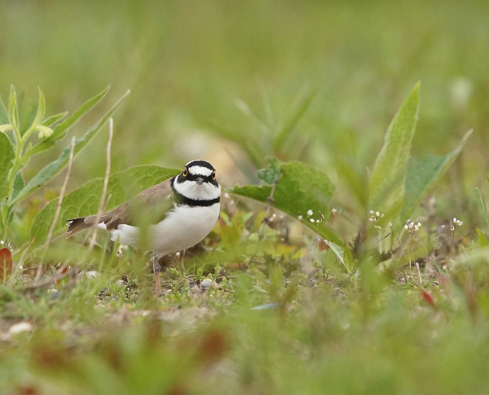 De wereld door mijn lenzen kleine vogels op texel - Salontafel herbergt de wereld ...