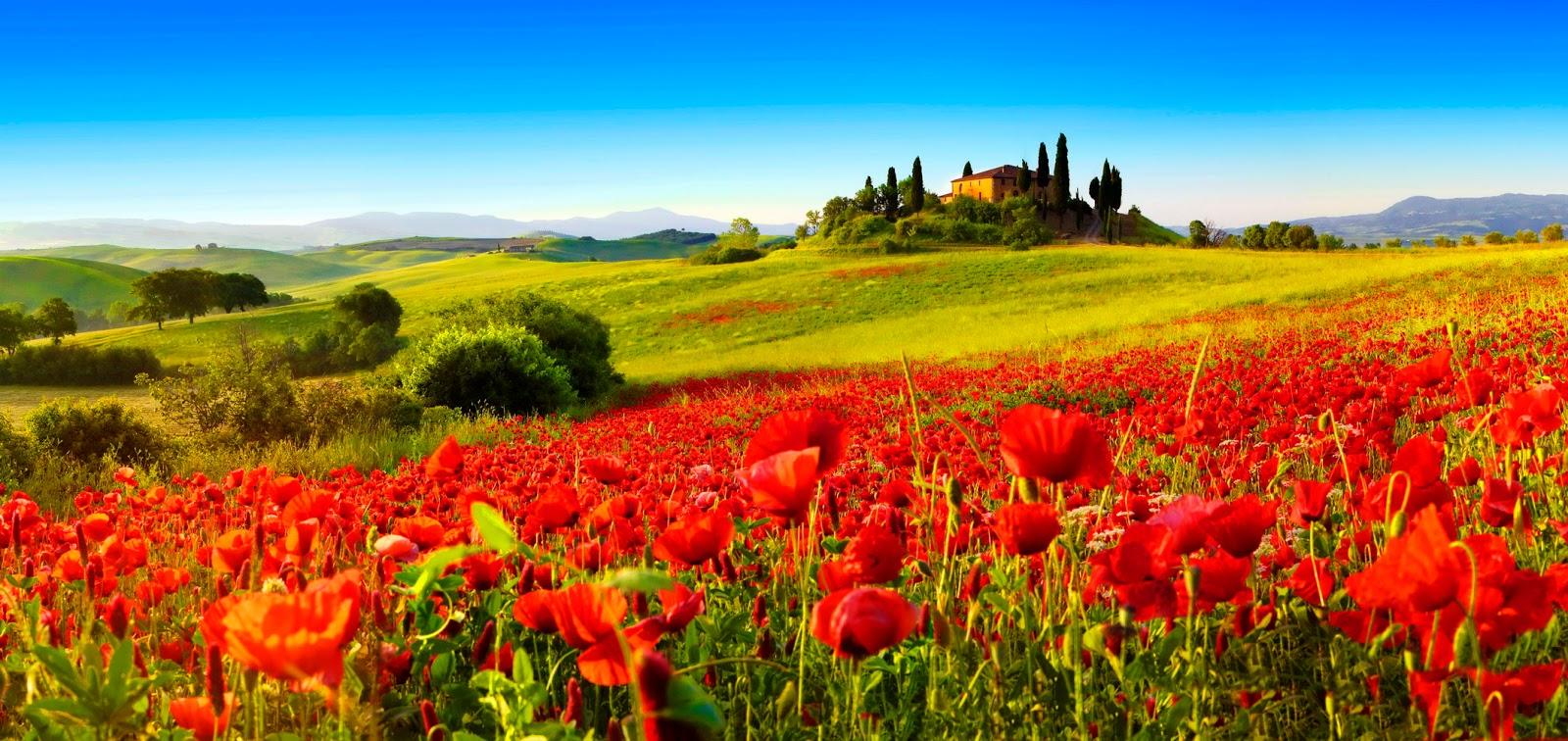 Toscana it lia dicas de viagem explore uma das mais - La provenza italiana ...