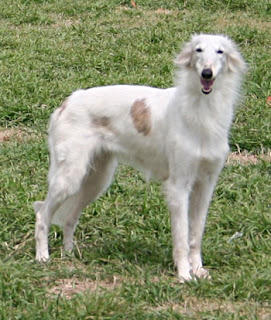 silken windhound - Trouble
