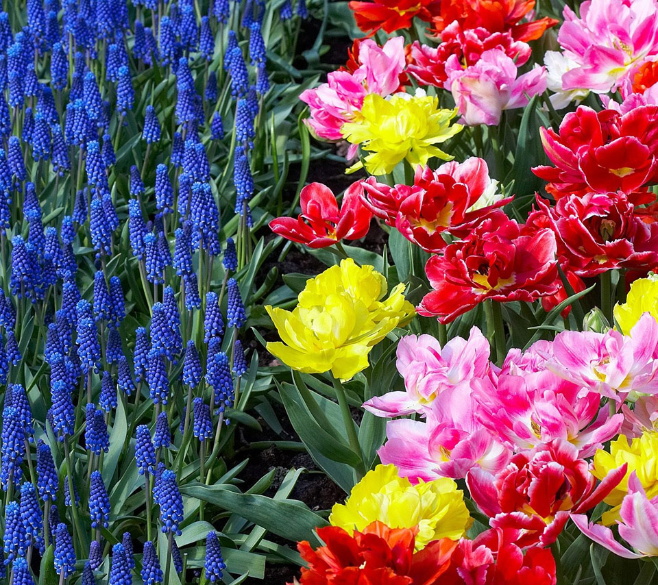 Flowers For Flower Lovers.: Beautiful Flowers HD Wallpapers