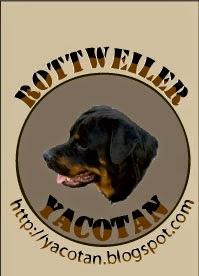Rottweiler Yacotan